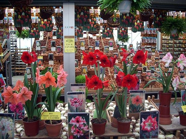 588 - Mercado das Flores 02