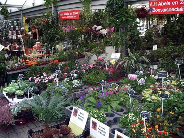 589 - Mercado das Flores 03